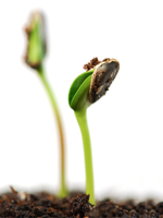 Our BDS products helps your business germinate and grow.